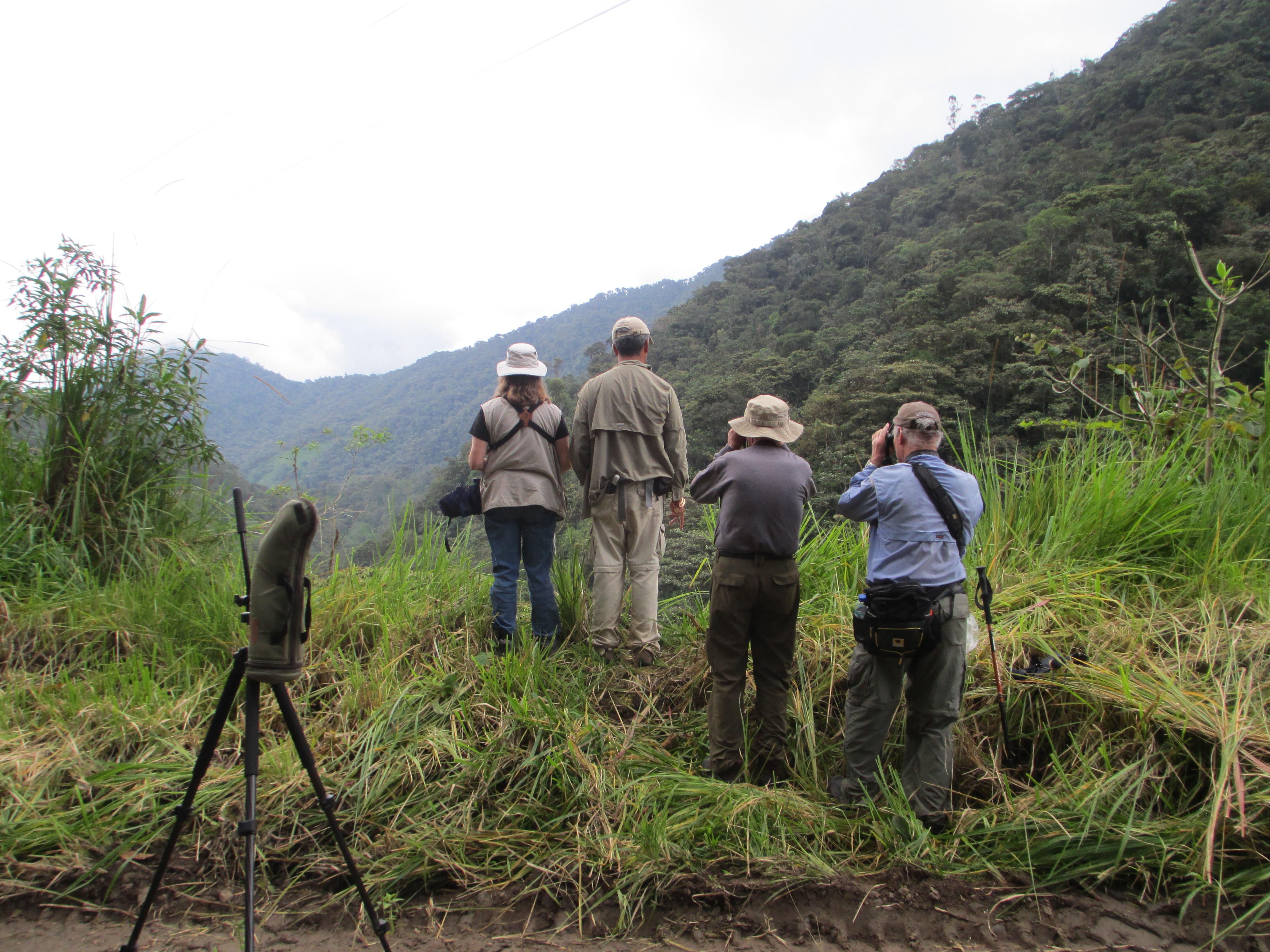 Birding in the Tandayapa Valley