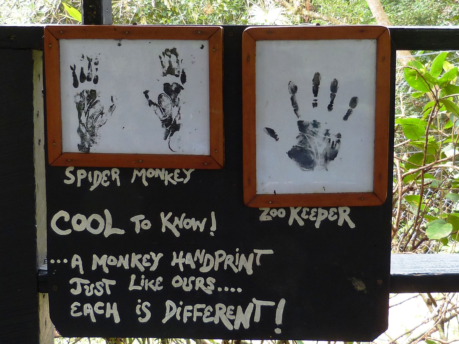Monkey sign at zoo