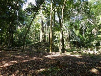 La Milpa Maya site