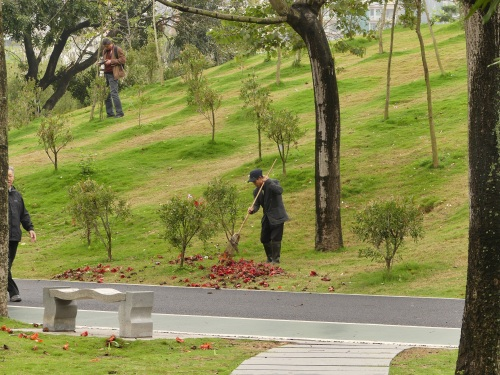 "Sweeping up fallen flowers in Shenzhen City Park. I have observed this ""cleaning up"" in all of Shenzhen's city parks."
