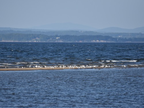 The sandbar seen from the beach at Noblewood Park. Photo by Derek Hudgins.