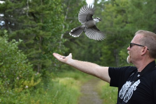 All done. A Canada Jay flies off David's hand. Photo by Derek Hudgins.