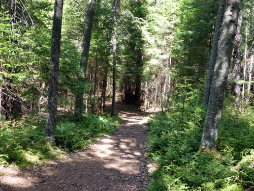 Along the Boreal Trail at Paul Smith's Visitor Interpretive Center
