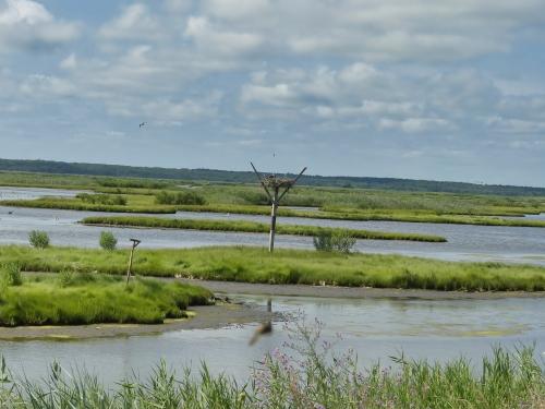 Osprey nest in the marsh